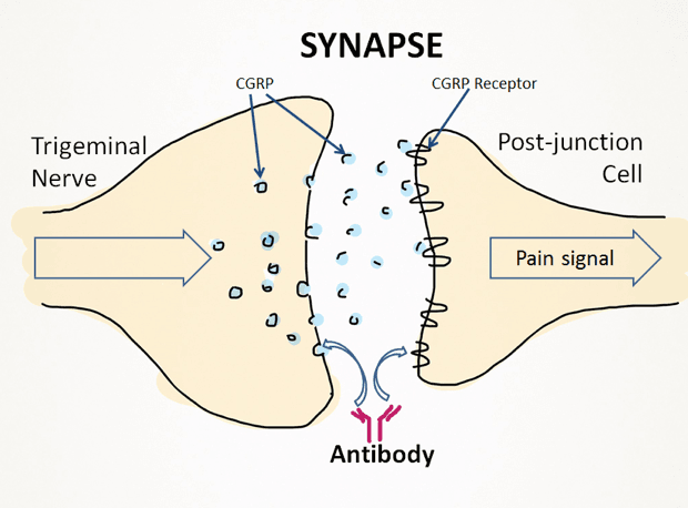 Synapse diagram